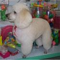 Como montar um Pet Shop curso online